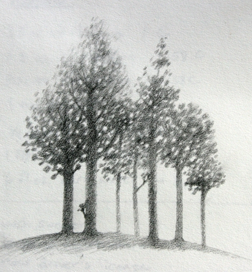 glade forest trees drawing inspiration
